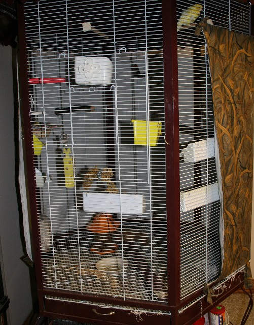 Canaries Cage